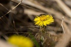 Una abeja y una flor Fotografía de archivo