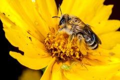Una abeja y una araña Imágenes de archivo libres de regalías