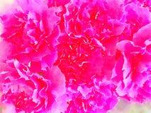 Una acuarela de claveles rosados Imagen de archivo libre de regalías