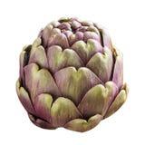 Una alcachofa fresca púrpura grande aislada en blanco fotografía de archivo libre de regalías