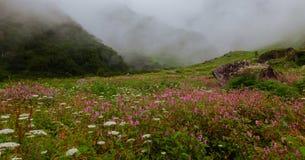 Una alfombra floreciente de Himalaya imagenes de archivo