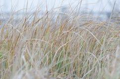 Una alta hierba seca Foto de archivo libre de regalías