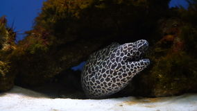 Una anguila en un acuario almacen de video