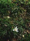 Una animal y flor foto de archivo
