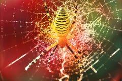 Una araña amarilla en el web en los descensos Foto de archivo
