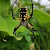 Una araña de jardín Fotos de archivo
