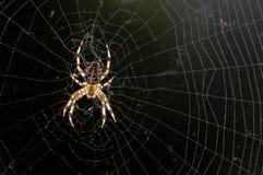 Una araña en ella \ 's mojados en el sol Imagen de archivo libre de regalías