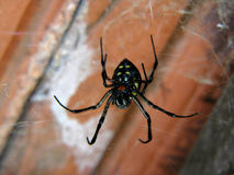 Una araña en su Web Foto de archivo