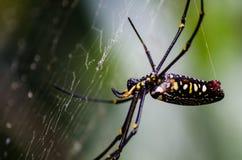 Una araña espera en su web Imagen de archivo