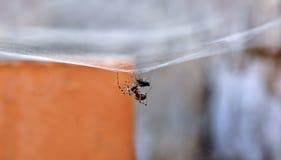 Una araña está prisionera Imagenes de archivo