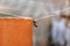 Una araña está prisionera Foto de archivo