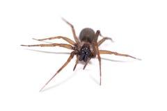Paseo de la araña imagen de archivo
