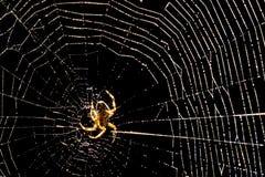 Spiderweb en el sol Foto de archivo