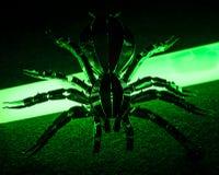 Una araña tóxica y radiactiva Imagenes de archivo