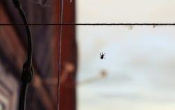 Una araña teje su red invisible Imagenes de archivo