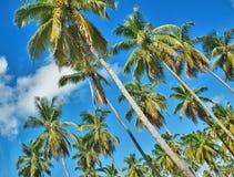 Una arboleda de la palma Imagen de archivo libre de regalías
