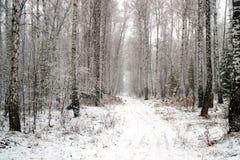 Una arboleda nevosa y un camino toda en la nieve, invierno del abedul en Rusia Foto de archivo