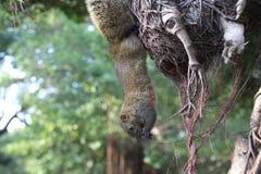 una ardilla cuelga en el árbol fotografía de archivo