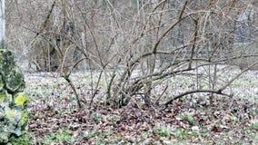 Una ardilla en el bosque almacen de metraje de vídeo