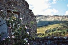 Una arquitectura abandonada en un campo con verdor en el frente fotos de archivo libres de regalías