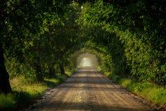 Una avenida de la cal Foto de archivo