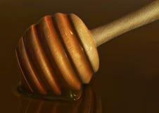 Una bacchetta o un merlo acquaiolo del miele in miele Immagine Stock