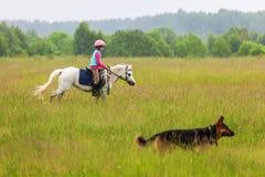 Una bambina cammina su un cavallo è un vicino del pastore tedesco all'aperto Immagine Stock