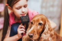 Una bambina da preoccuparsi per il cane ed i peli di pettinatura immagini stock