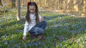 Una bambina raccoglie Scilla Siberian o il bucaneve blu in una foresta della molla in uno schiarimento Si siede sulle sue ginocch stock footage