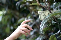 Una banconota in dollari sull'albero Fotografie Stock