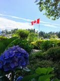 Una bandiera del Canada che vola vallantly nei precedenti con l'idraulica porpora fotografia stock libera da diritti