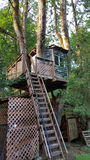 Una bella casa sull'albero di sguardo Fotografia Stock