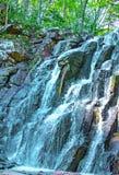 Una bella cascata nella fauna selvatica della foresta, cascate in un taiga abbandonato della foresta Fotografia Stock Libera da Diritti