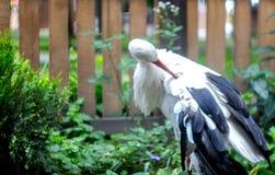 Una bella cicogna sui precedenti di un recinto con un albero fotografia stock