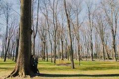 Una bella coppia amorosa che sorride e che bacia un grande albero nel parco Immagini Stock Libere da Diritti