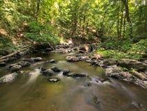 Una bella corrente della foresta Immagine Stock Libera da Diritti