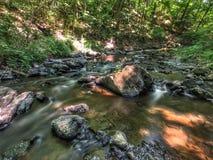 Una bella corrente della foresta Immagini Stock Libere da Diritti