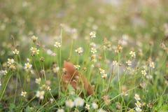 Una bella erba dei fiori Immagine Stock Libera da Diritti