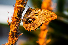 Una bella farfalla Fotografia Stock Libera da Diritti