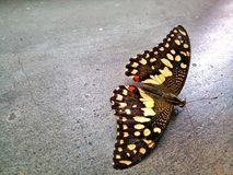 Una bella farfalla immagine stock libera da diritti