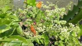 Una bella farfalla nella foglia dolce, immagine stock libera da diritti