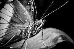 Una bella farfalla su una foglia Fotografia Stock