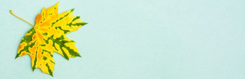 Una bella foglia di acero caduta chiazzata giallo verde fotografia stock libera da diritti