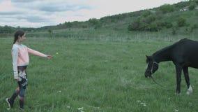 Una bella giovane donna sta tirando un fiore giallo del cavallo La ragazza è amichevole con il cavallo Un regalo per un cavallo d stock footage
