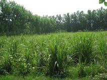 UNA BELLA IMMAGINE DELLA FORESTA IN INDIA Fotografia Stock