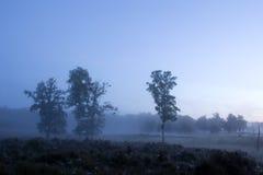 Una bella mattina nebbiosa Immagine Stock