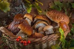 Una bella natura morta dai grandi funghi bianchi naturali Fotografia Stock Libera da Diritti