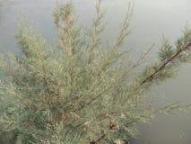 una bella pianta Immagini Stock
