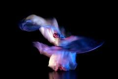 Una bella prestazione di ballo, effetto della sfuocatura di movimento Fotografia Stock