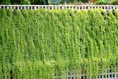 Una bella progettazione di una pianta da appartamento all'aperto che cresce sulla parete del metallo bianco fotografia stock libera da diritti